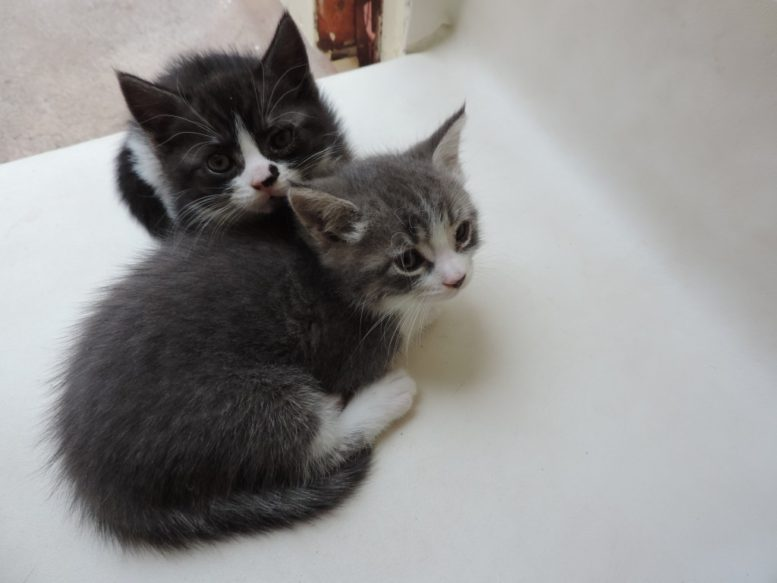 Kittens Specialcats