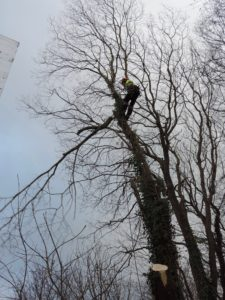 tree being pruned